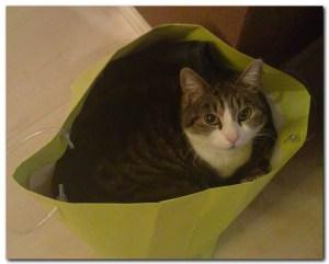 кошка в зеленом мешке
