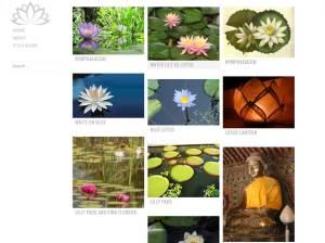 Яркий шаблон для WordPress Water-lily