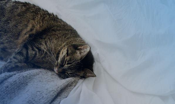 Фото кота.